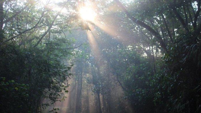 Bosco della nebbia mexico