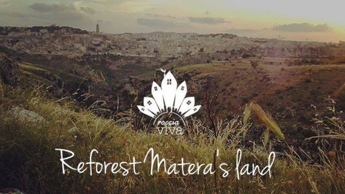 reforest land matera