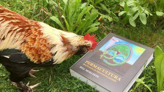 manuale permacultura bill mollison italiano