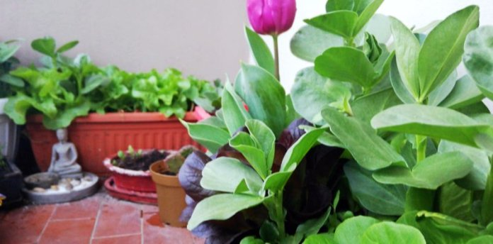 primavera microorto domestico