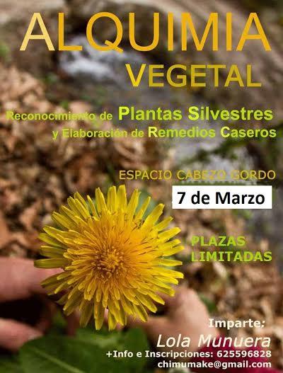 Taller de Reconocimiento de Plantas Silvestres y Elaboración de Remedios Caseros Sábado 7 de Marzo de 10:00 a 20:00