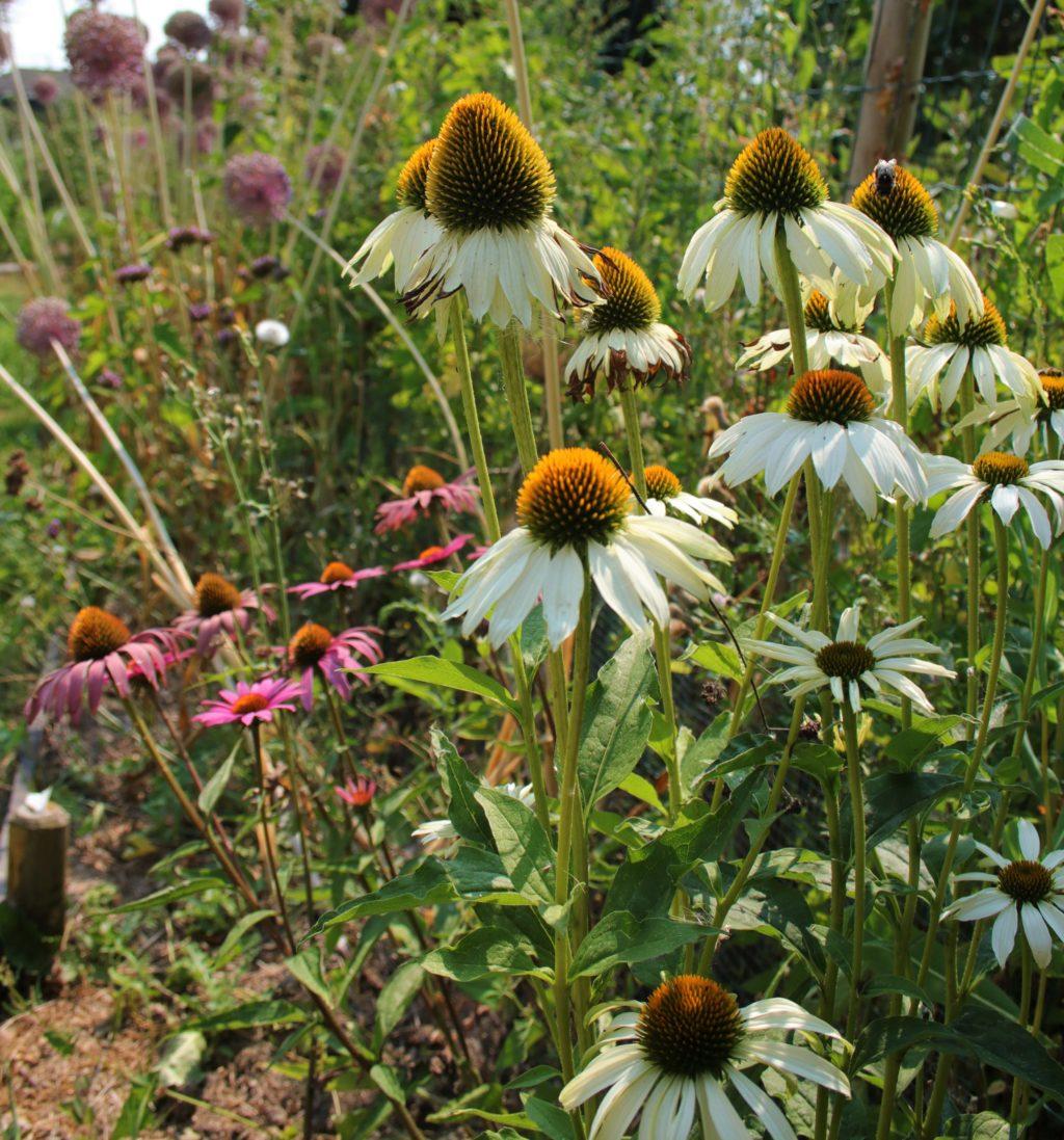 Permaculture : définition et éthiques