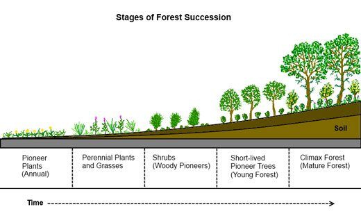 8. Accelerating Succession and Evolution | Deep Green Permaculture