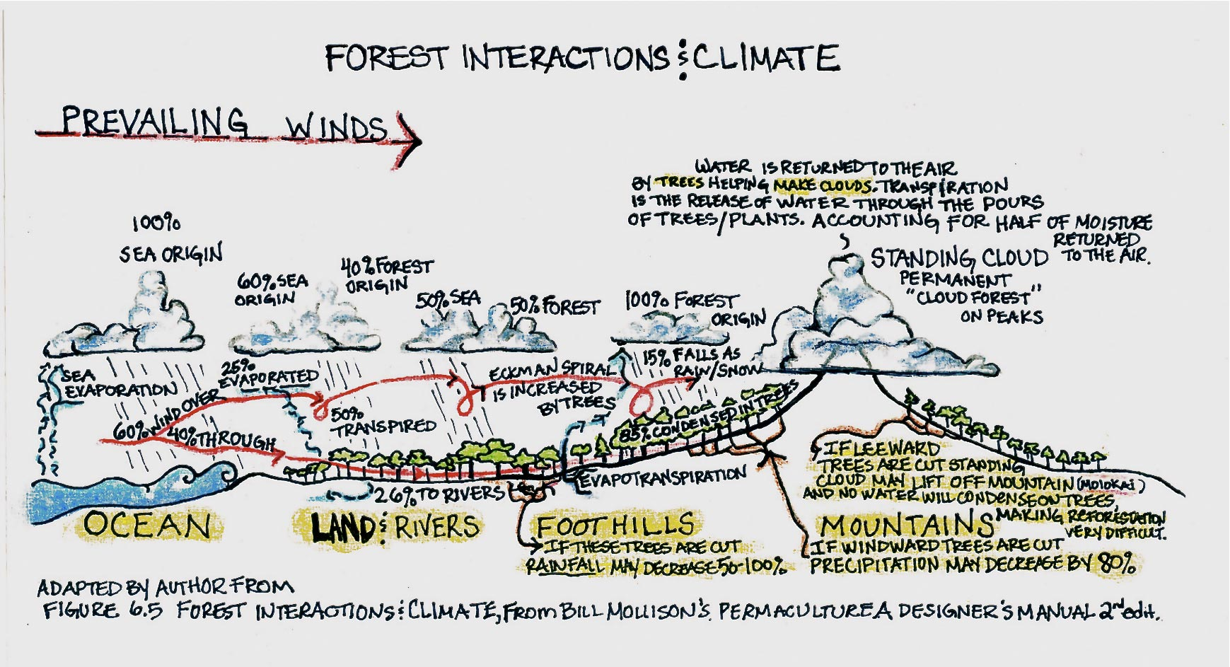 Forest Interations and Climate