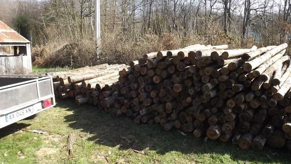 Timber (16)