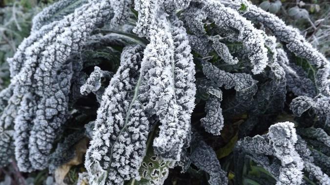 Frost ar Nero di Toscana
