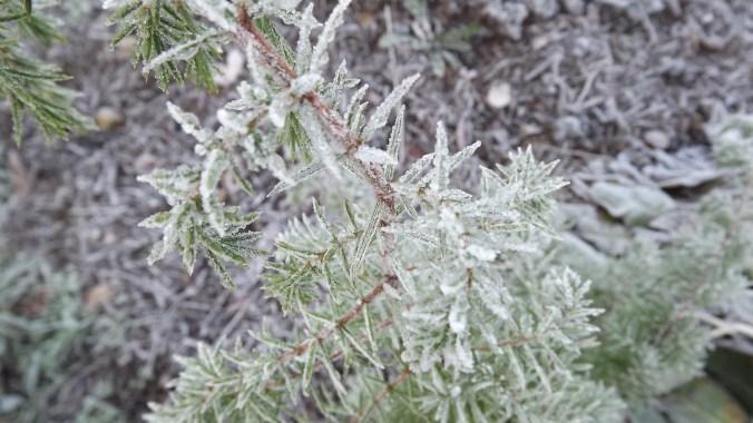 Frost ar szechuan bupur