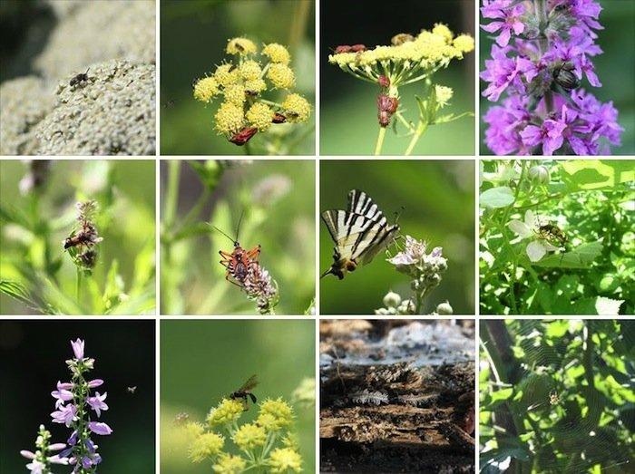 Garteninsekten