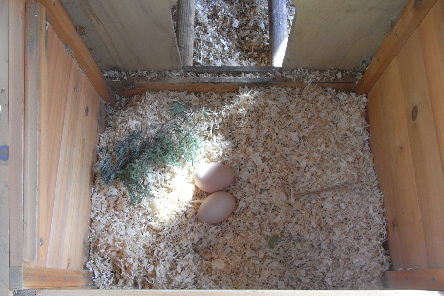 Herbs – Uses in Chicken Nesting Boxes