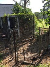 Chook pen to be moved