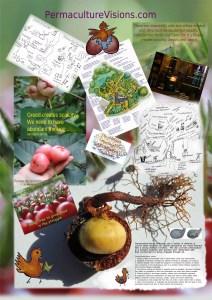 eco-arts-wgong-poster