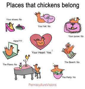 chickens-belong_edited-1