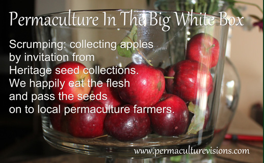 wild-harvesting-and-invited-scrumping