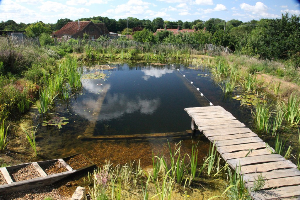 Natural Swimming Pools with David Pagan Butler PVP071