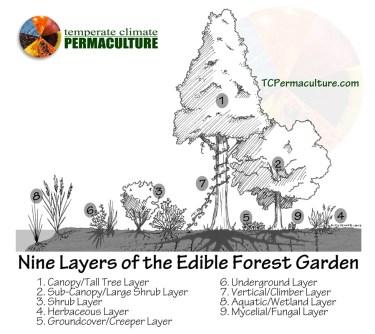 Forest_Garden_TCP