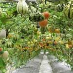 concevoir un jardin