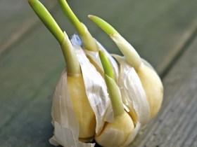 legume-qui-repousse