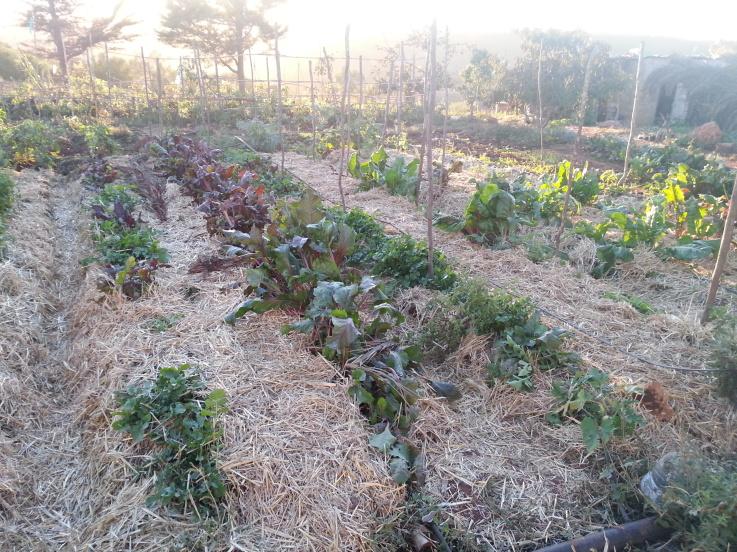 Permaculture - Maroc