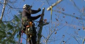 demontage d'arbre