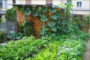 micro jardin 4