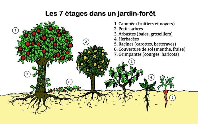 Schéma des étages du Jardin Forêt