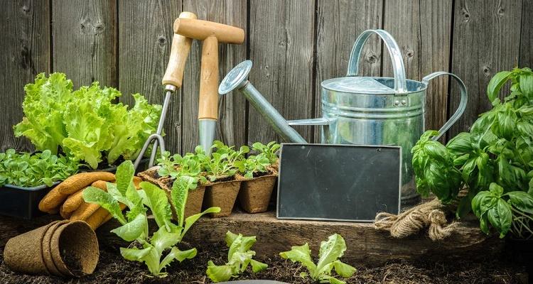 D marrer un jardin en permaculture permatheque - Comment demarrer un jardin en permaculture ...