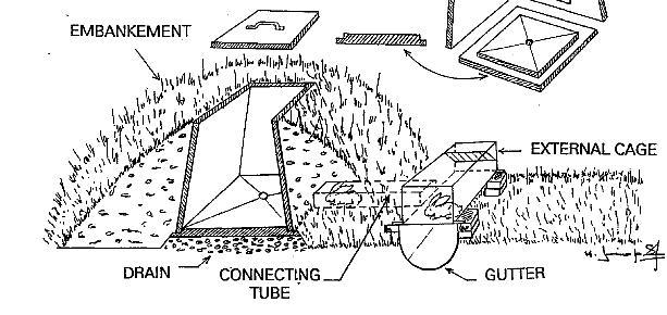 mountain beaver description auto electrical wiring diagram paddock shift idea for rabbit pigeon quail rabbits