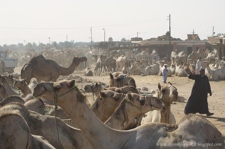 Camel market Egipt