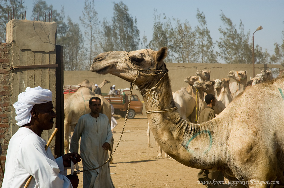 15_Camel_market_Birkasz