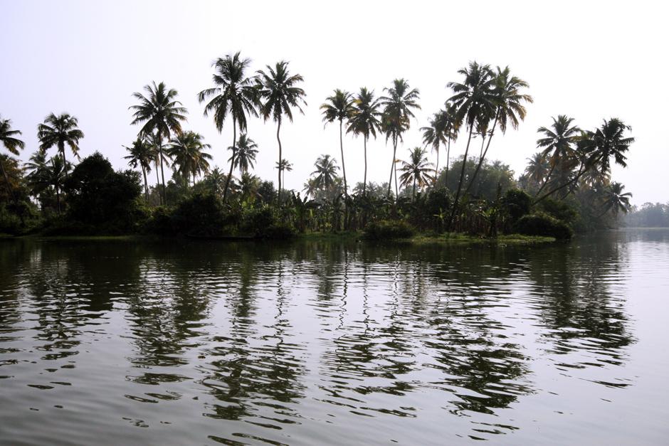 Palmy w indyjskim Kerali