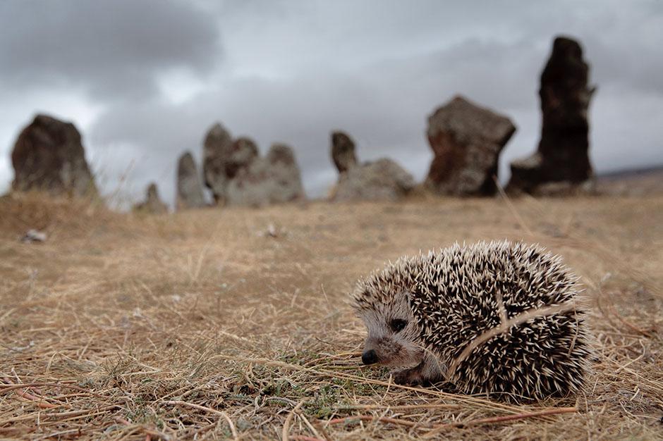 15. ARMENIA, niedaleko Shaki. Jeżyk w starożytnym planetarium Zorats Karer. (Fot. Thomas Alboth)