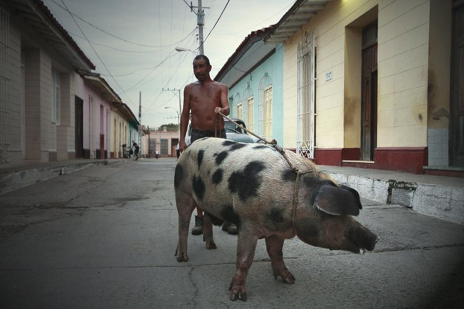 KUBA, Trynidad. Właśnie wówczas można natknąć się na spacerujące świnie. (Fot. Agnieszka i Mateusz Waligóra)
