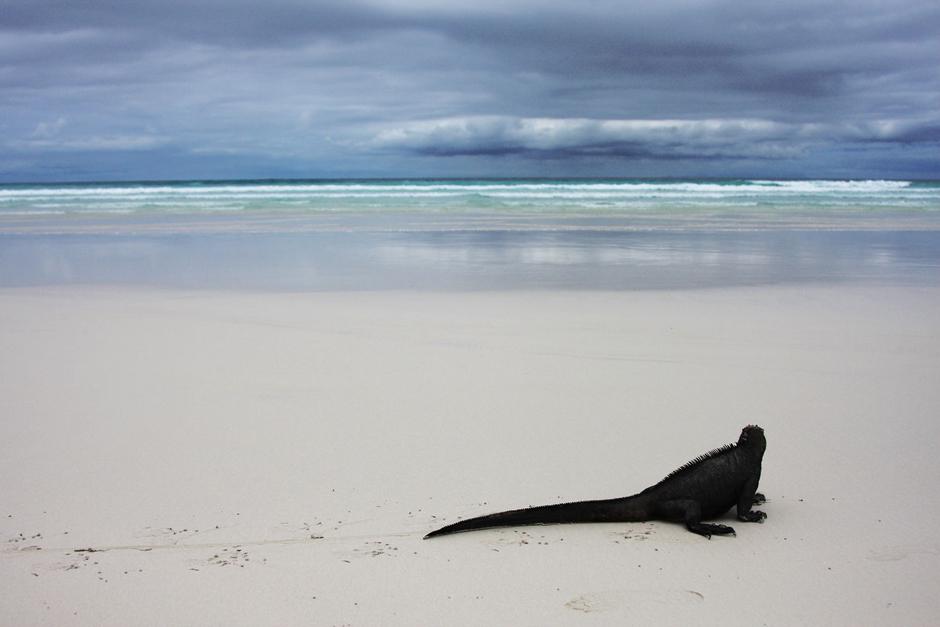 13. GALAPAGOS, plaża Tortuga na wyspie Santa Cruz. Obok tej plaży trudno przejść obojętnie - biały i drobny jak mąka piasek, żadnych ludzi, i najbardziej niesamowite pod słońcem zwierzęta. (Fot. Magda Biskup)