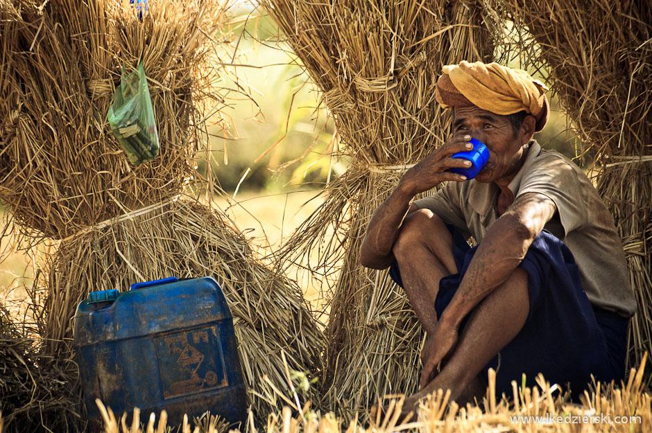 Żniwa w Birmie