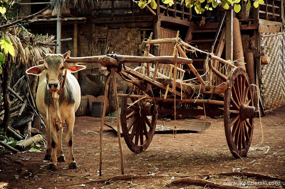 Drewniane wozy nadal uzywane są przez birmańskich rolników