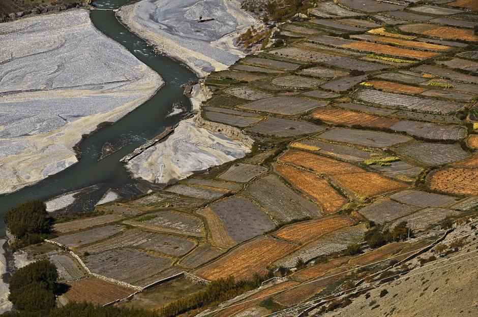 Pola uprawne u podnóży Himalajów