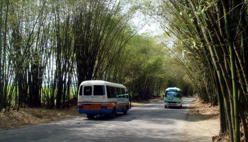 Bamboo Avenue na Jamaice