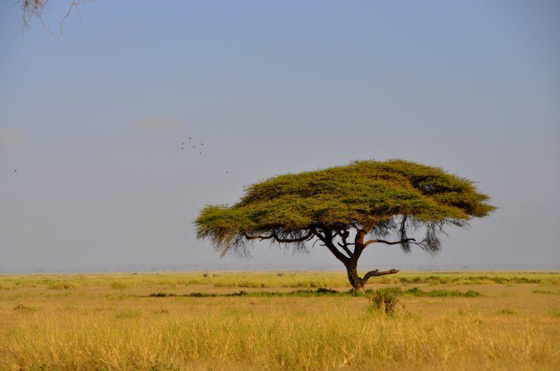 Sawanna w Kenii