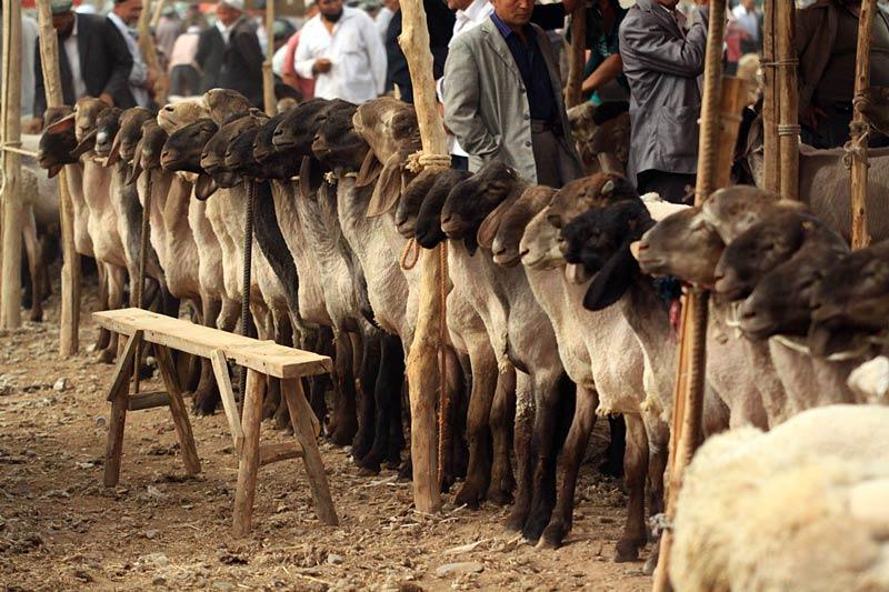 Zwierzęta na azjatyckim targu