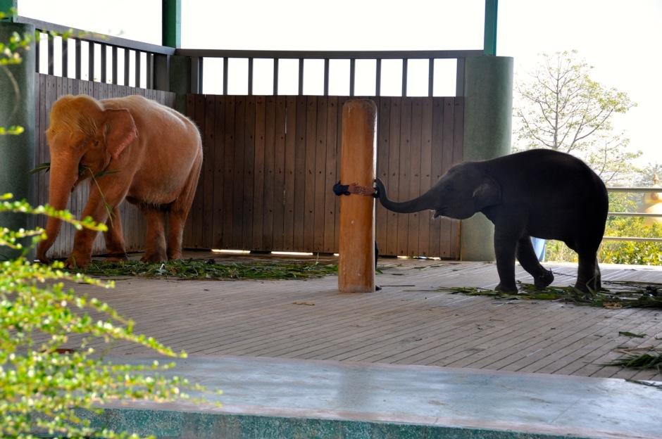 Przed pagodą Uppatasanti można zobaczyć białego słonia