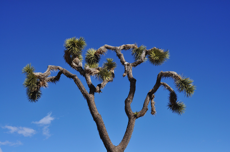 Park Narodowy Joshua Tree