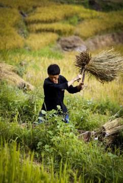 Praca na roli w Wietnamie