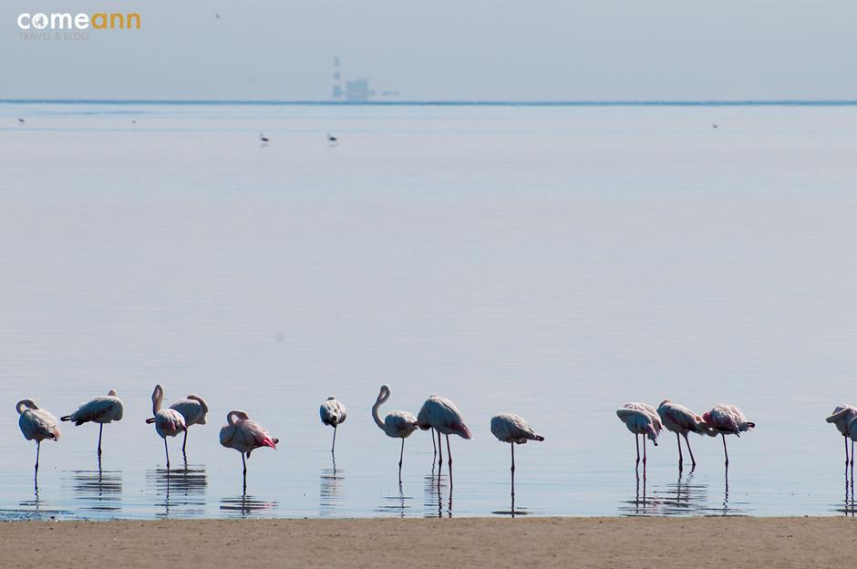 Flamingii w Afryce