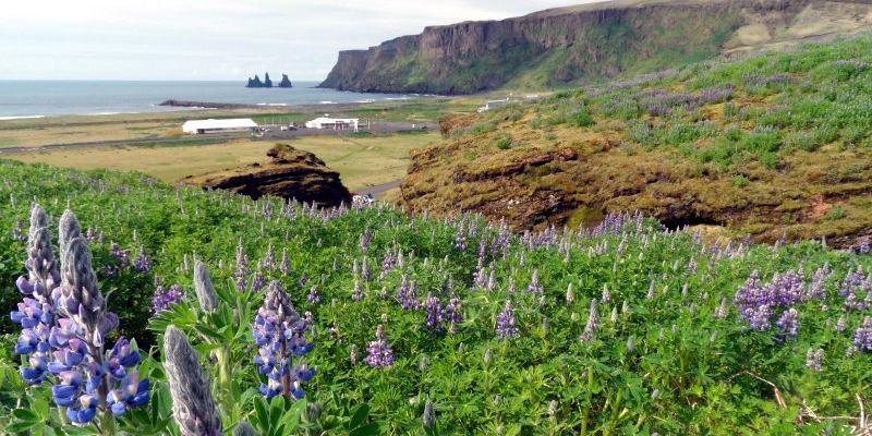 Vik na Islandii - jedna z najpiękniejszych plaż świata