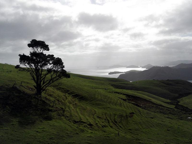 Pastwiska Nowej Zelandii - zdjęcia z wolontariatu