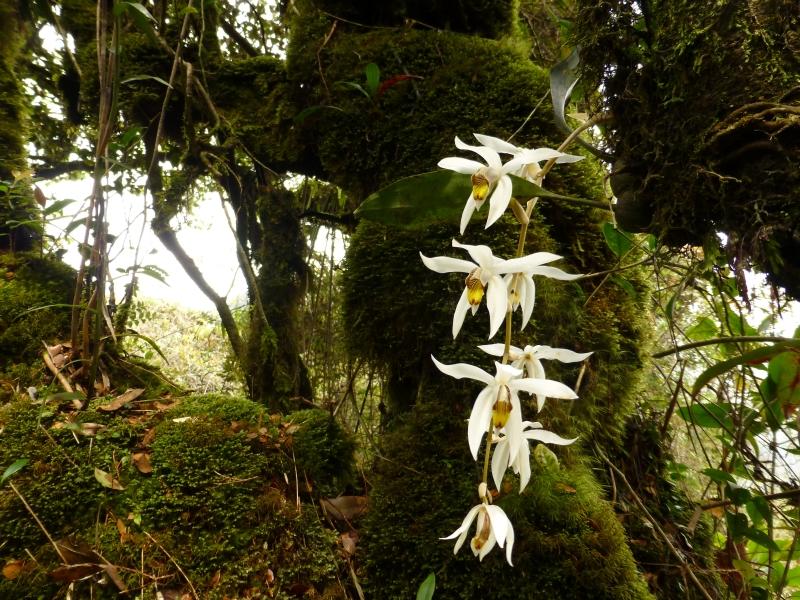 Las w Camoren Highland w Malezji. (Fot. Ania Bunikowska i Tomasz Marchewka)