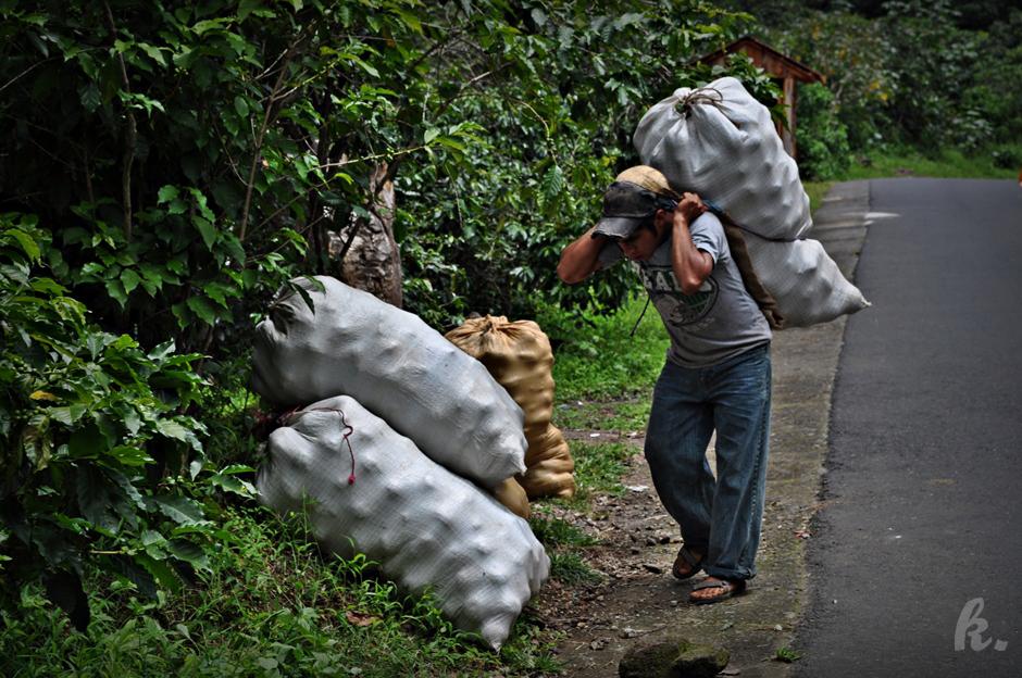 Gwatemalski tragarz z workami pełnymi awokado - zdjęcia z podróży