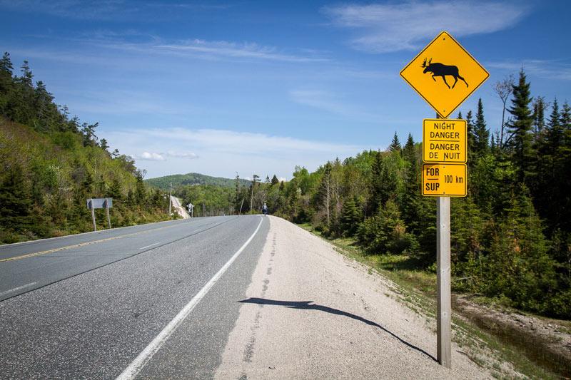 Kanada - znak ostrzegający przed łosiami