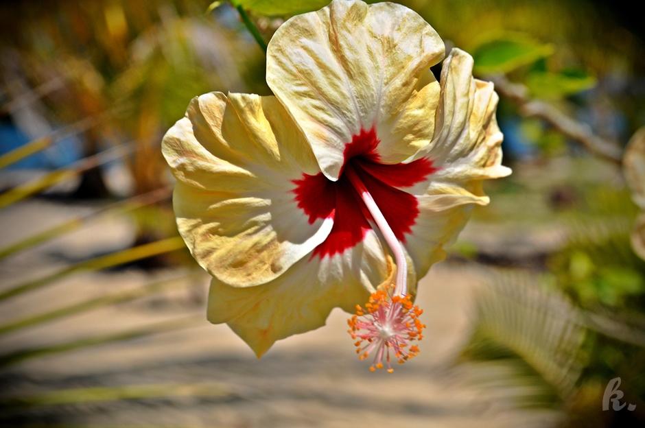 Piękna przyroda na Karaibach - zdjęcia z Belize