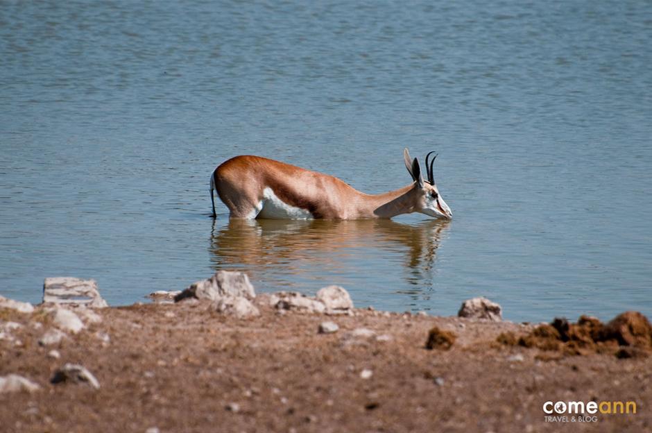 Safari w Afryce - foto
